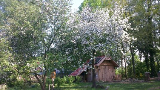 Scheune und alter Baumbestand im Naturgarten
