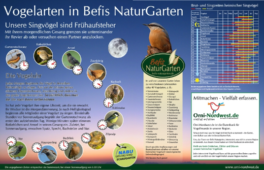 Die Vogeluhr in Befis NaturGarten - einer Übersicht der Brut-, Nist- und Singzeiten