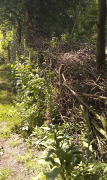 Benjeshecke im Naturgarten