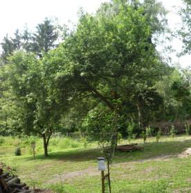 Alter Obstbaumbestand in Befis NaturGarten