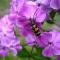 Insekten in Naturgarten